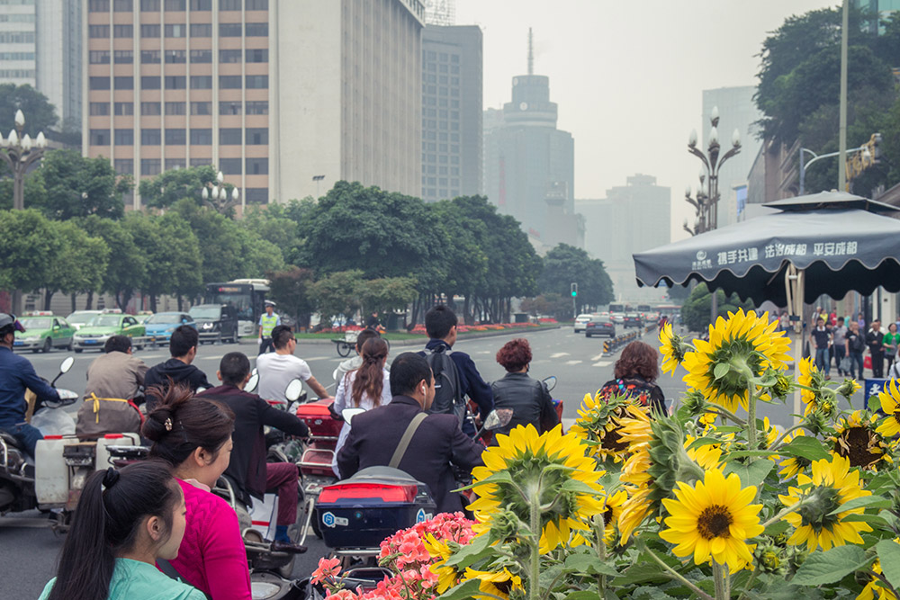 Sunflowers and people in Chengdu