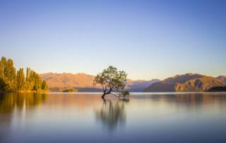 Tree in water in Wanaka